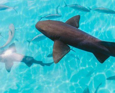duiken fiji